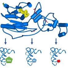 Somatische Mutationen in Dnmt2 ändern die katalytische Aktivität