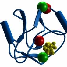 Struktur der katalytischen Domäne von MLL1