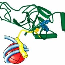 Schematische Darstellung des Komplex von NSD1 und Histon H1