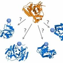 Welche Substrate werden von einer Protein Methyltransferase methyliert?
