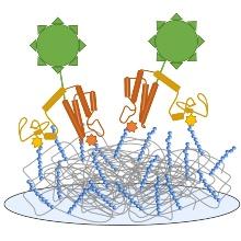Prinzip der Anwendung von Doppelarrays zur Analyse von Doppellesedomänen