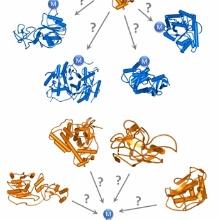 Welche Proteine (blau) werden von PKMTs (orange) methyliert? Welche PKMTs sind für bestimmte Methylierungsergeibnisse verantwortlich?