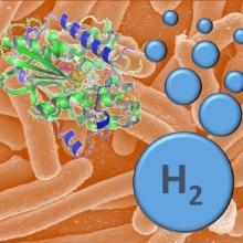 Wasserstoffproduktion einer Typ II Ni/Fe Hydrogenase
