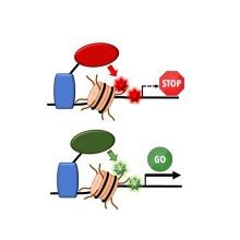 Schema der Epigenom Editierung mittels Epieditoren