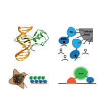 Biotechnologische Anwendungen von MBD Proteinen