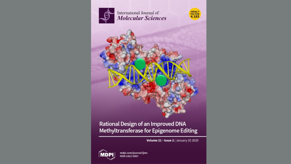Cover image of International Journal of Molecular Sciences Jan 2020