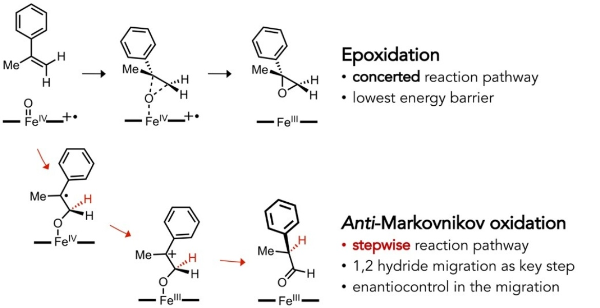 Anti-Markovnikov alkene oxidation by metal-oxo–mediated enzyme catalysis