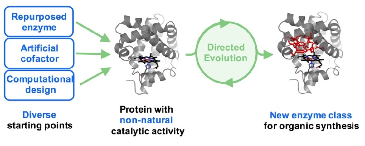 Design and evolution of enzymes for non-natural chemistry